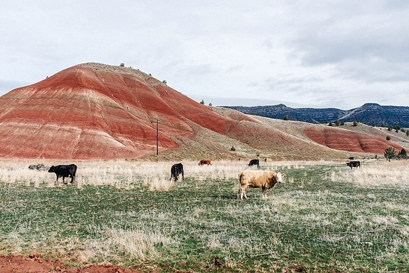 painted hills Roadtrip San Francisco - Vancouver2016 05 18 0006