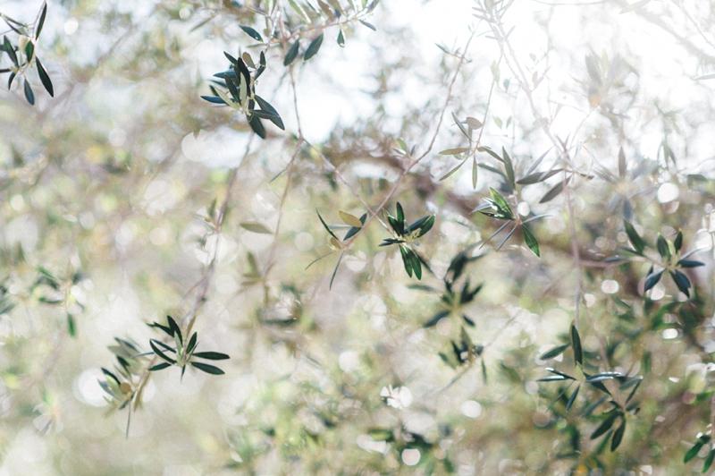 destination-hochzeitsfotograf-mallorca-video_0450 hochzeitsfotograf mallorcaJae-in & Suk-jae Paarshooting auf Mallorcadestination hochzeitsfotograf mallorca video 0450