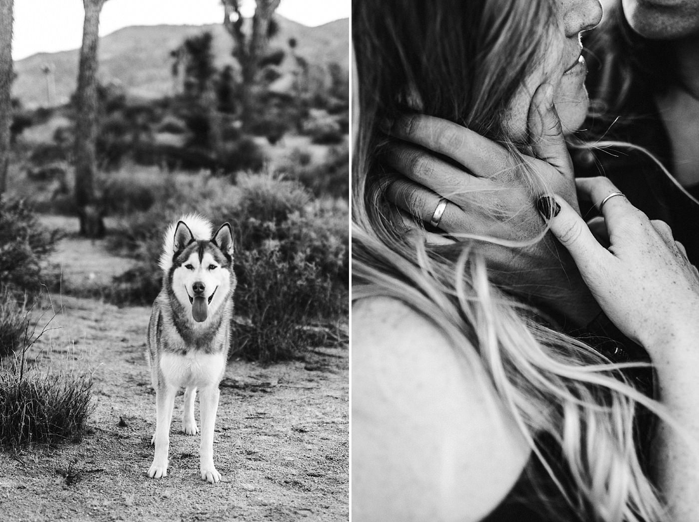 international-elopement-photographer_0180 Kinsey & Josh & Banjo Photographer in Joshuatreeinternational elopement photographer 0180